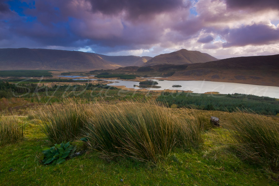 <strong>Title: </strong>Tawnyard<br /><strong>Filename:</strong>Connemara_231108_202<br /><strong>Image Reference Number: </strong>l027
