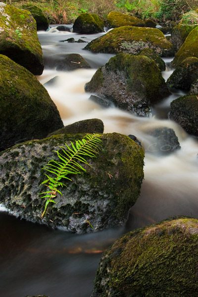 <strong>Title: </strong>Fern at Loughkip River<br /><strong>Filename:</strong>Loughkip River-131207-055<br /><strong>Image Reference Number: </strong>swl014